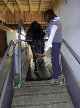 marquis hufschuhe für pferde pferdeschuhe trainingsgeräte für pferde pferdelaufband laufband für Pferde