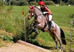 Hufschuhe für Pferde