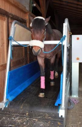 Laufband marquis VMSwalker für Pferde