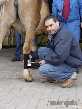 Computerkinematographie - Lahmheitsdiagnose und Bewegungsanalyse für Pferde